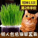 七彩屋 猫草种子猫薄荷粉去毛球猫草盆套装种子小麦幼猫猫咪零食洁齿