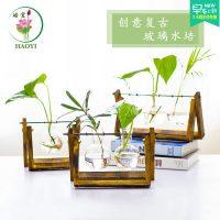 与花同行 创意水培绿植绿萝花卉盆栽室内植物客厅办公桌吸甲醛防辐射