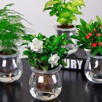 一宅一花 L栀子花绿萝水培植物盆栽花卉室内盆景绿植吊兰办公室盆栽发财树