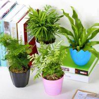 万象更新 绿植盆栽园艺植物水培植物室内花卉绿萝幸福树大盆景 4款